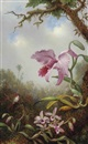 Martin Johnson Heade, Hummingbird and Two Types of Orchids