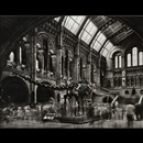 Matthew Pillsbury, Diplodocus #2, Natural History Museum, London