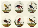 Indian School-Tanjore (19), Birds Of Southern India (12 works)