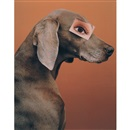 William Wegman, Eyewear / Game