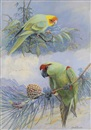 Allan Brooks, Carolina Parakeet and Thick Billed Parrot