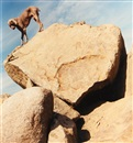 William Wegman, Rock Clock