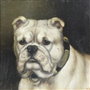 Edward Aistrop, A portrait of a Bulldog