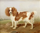 Martin Theodore Ward, A brown and white spaniel in a landscape