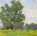 Michael Healy, Trees study, summertime