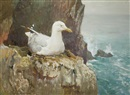 Charles Walter Simpson, Seagull on a cliff
