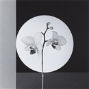Robert Mapplethorpe, Orchid