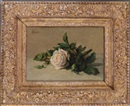 After Henri Fantin-Latour, White rose
