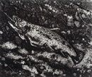 Vik Muniz, The Trout after Courbet (from Pictures of Soil series)