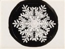 Wilson A. Bentley, Snow crystals (suite of 4)