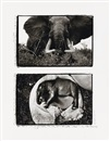 Peter Beard, Charging Bull Elephant and Elephant Embryo, Uganda (diptych)