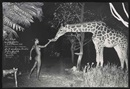 Peter Beard, Hog Ranch night feeder, 2am, Maureen G. and Mbuno, Nairobi, Kenya, for the Last Word from Paradise, March