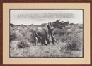 Peter Beard, Marsabit's last remaining large Tusker, shortly before his disapperance (from The End of the Game/Last Word from Paradise, March)