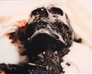 Andres Serrano, Burnt to death (from The morgue)