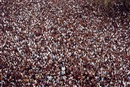 Steve McCurry, India, Kerala, Hindus during Trichur Pooram