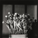 Robert Mapplethorpe, Tulips