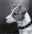 Head of a Terrier (+ Head of a Jack Russell Terrier; 2 works) by Edward Aistrop