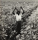 Water boy, Mississippi Delta by Dorothea Lange