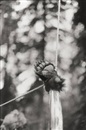 Bear paw Hanging by Zoe Leonard