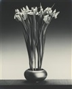 Irises by Robert Mapplethorpe