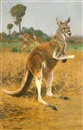 Red Kangaroos in the Outback by Wilhelm Friedrich Kuhnert