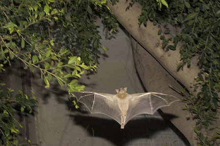 Bats by Jan Tichy