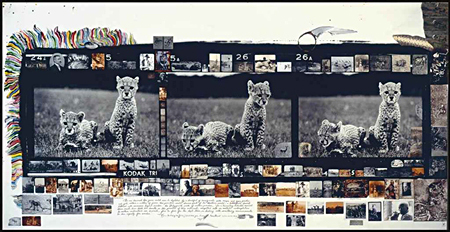 Orphan Cheetah Triptych by Peter Beard