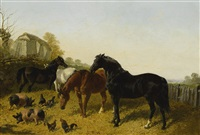 HORSES AND CHICKENS