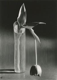 Melancholic Tulip, Paris by André Kertész